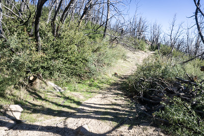 20170401058-Chilao, Hillyer, Silver Moccasin Trailwork