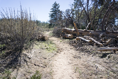 20170401053-Chilao, Hillyer, Silver Moccasin Trailwork