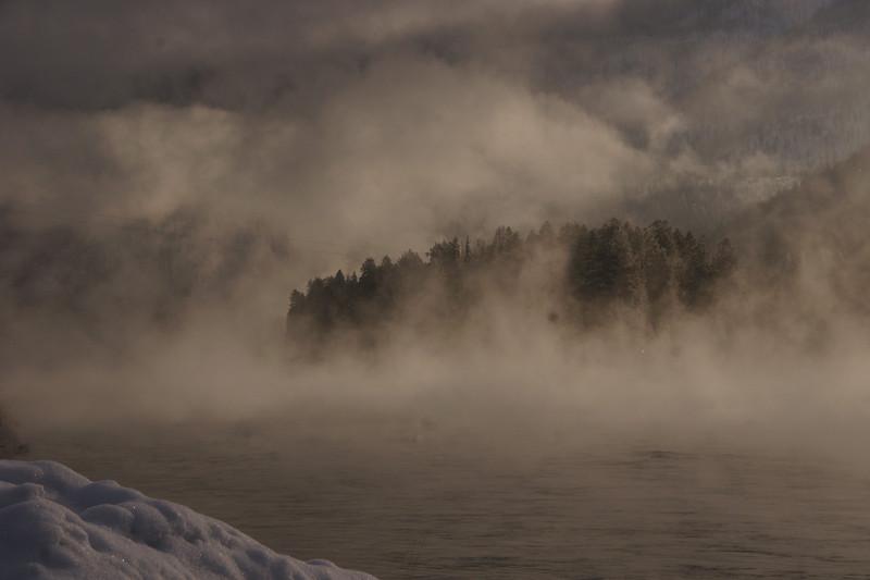 Tree Englufed by Morning Fog, Libby, MT