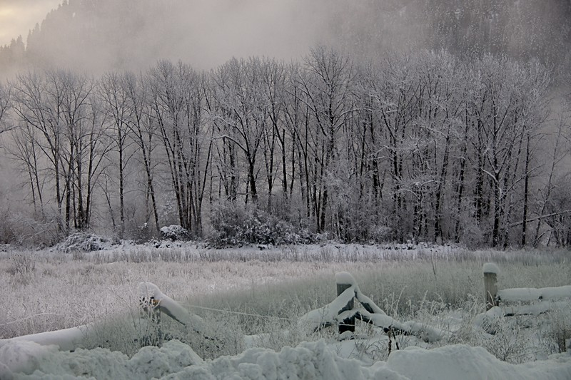 Hoar Frost near the Kootenai River, Libby, MT