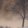 A Winter Tree in the River MIst, Libby, MT