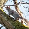 20170213 Sixth Squirrel
