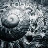 20170515 Snail Shell