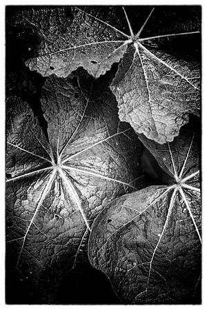 Leaf drama
