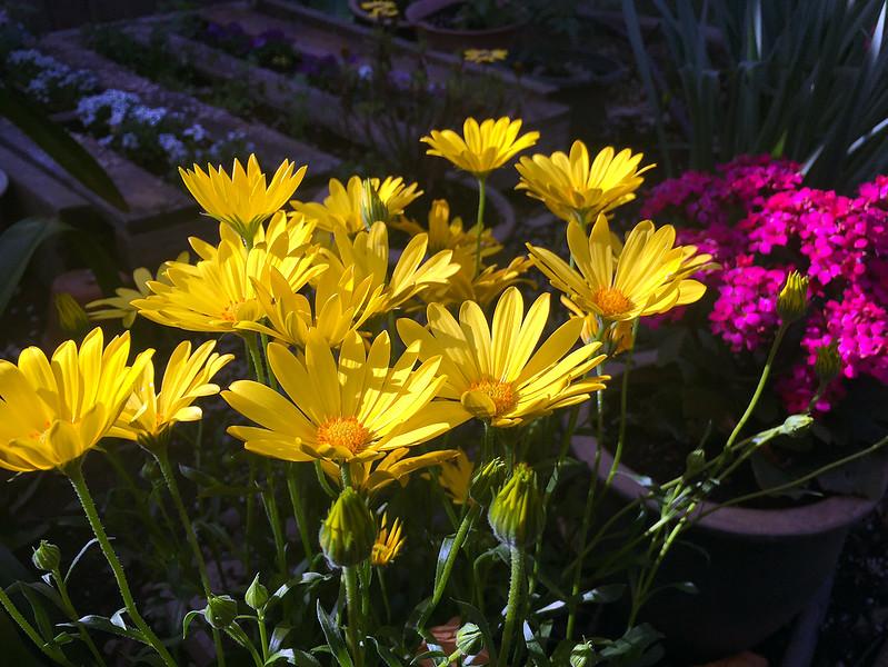 malida's flowers