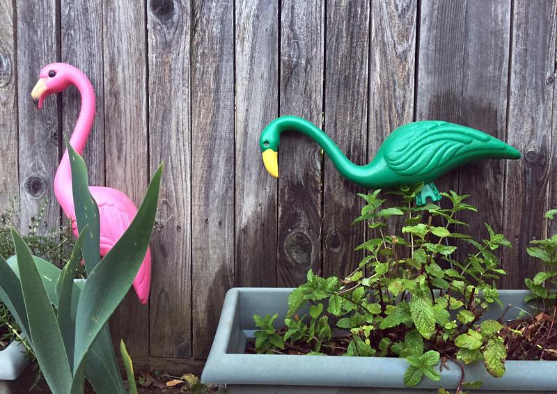 garden flamingos