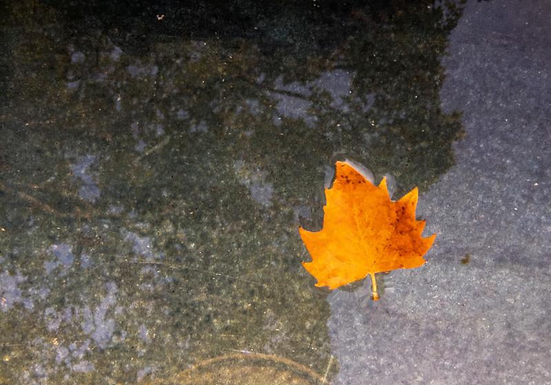 mercy leaf