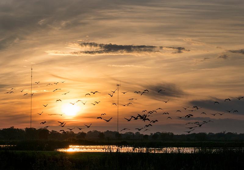 cosumnes sunset