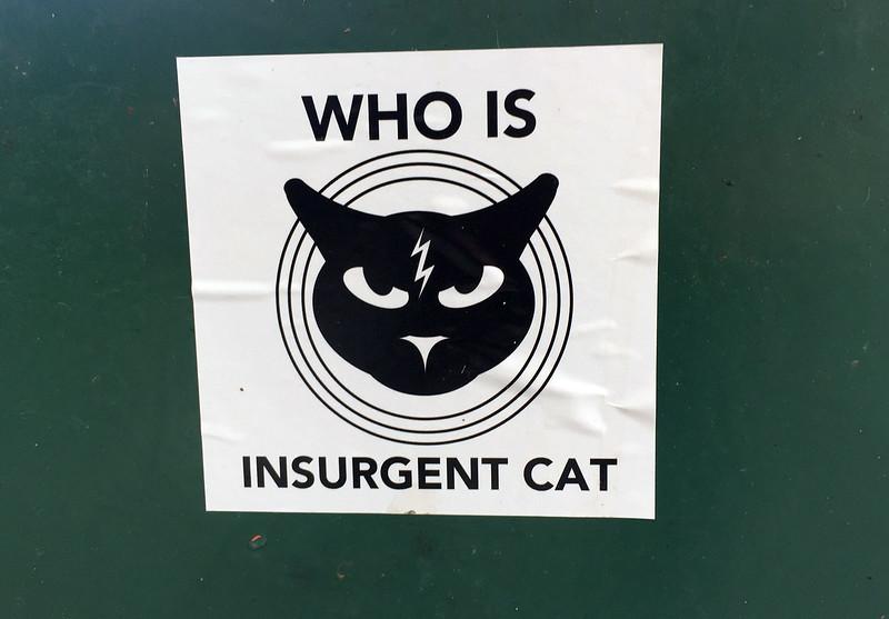 insurgent cat