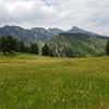 Front Range Meadow
