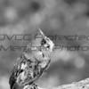 raptor 25mm (5)