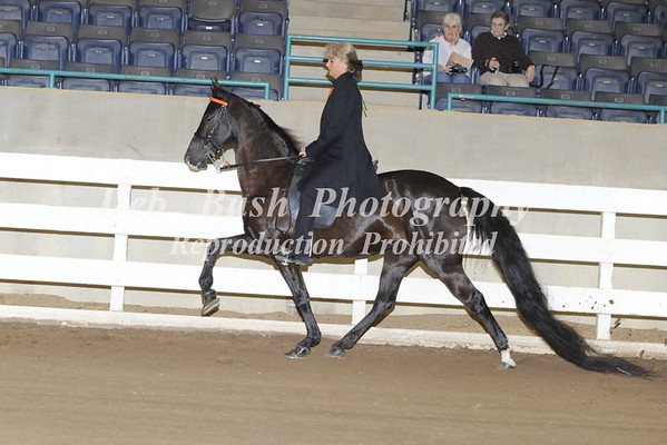 CLASS 6 LITE SHOD AMATEUR OWNED TRAINED  SPEC