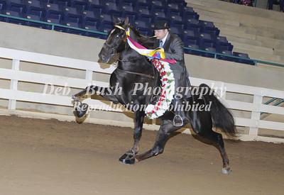 2017  SC WALKING HORSE CHAMPIONSHIP - CLEMSON  SC   OCT 27-28