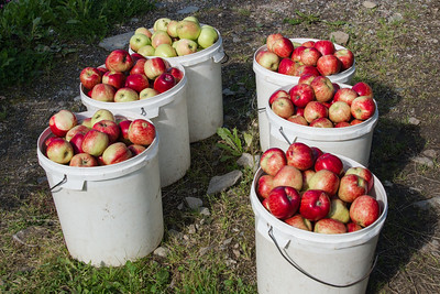 Steinstoe Fruitfarm