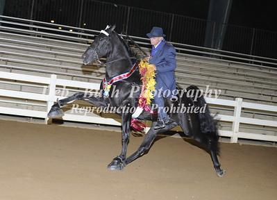 CLASS 50 WALKING HORSE STAKE CHAMPIONSHIP