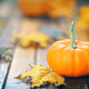 Autumn Pumpkin Narrow DOF