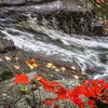 Fall Leaves by a Stream