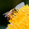 Spring_Nectar Hunting