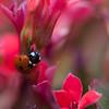 Ladybug rsz