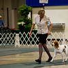 23	FINALE'S ENCORE , SR79472901 8/2/2013. Breeder: Linda McDonald. By DC AFC Megasmoke's Grand Finale -- FC K Nine's On The Loose. Linda McDonald . Dog. Katelyn Ford, Agent.