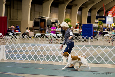 BRITANY VETERAN SWEEPSTAKES 7 years and under 10 years Bitches. 1/OS      38	GCH SHILOH'S SWIFT KISS A TAQ , SR60677303 1/5/2010. Breeder: Pennie Peterson, Katelyn Ford and. Frances N Phillips By DCH Redline's Tequila Moon -- CH Swift River's Flashback N Time. Deborah and Michael Frane . Bitch. Sandy Garlinger-Torres, Agent.