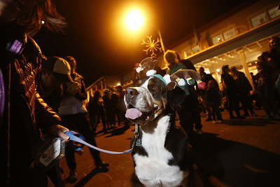 Oscar, a 6 year-old Swiss mountain dog, of Santa Fe, walks his owner, Amy Hope, around the plaza during the Holiday Lighting on the Plaza on Friday, November 24, 2017. Luis Sánchez Saturno/The New Mexican