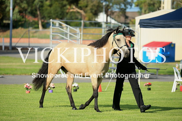 40th Annual APSB WA Branch Stud Pony Show  -  4.3.2017
