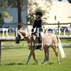 Open Dressage Series Day 2_350