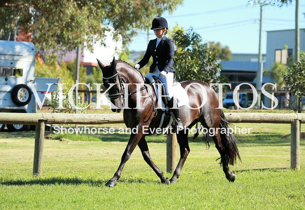 Open Dressage Training Competition Series Day 2 - 25th Feb