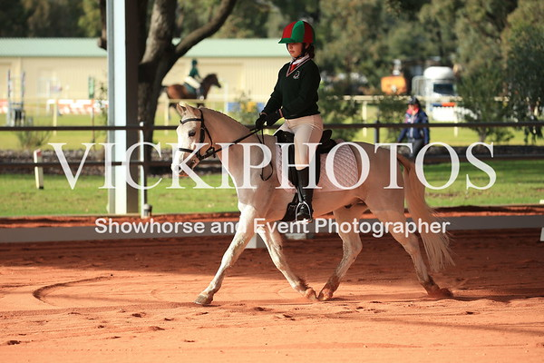 Orange Grove Dressage and Show Jumping Competition 3 - 2nd July