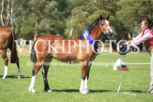 Pinjarra  All Breed Spectacular - 19th Feb