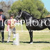 Welsh Youngstock Show - 26 2 20_518