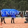 Working Equitation - 15 7 2017_1091