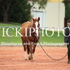 Working Equitation - 15 7 2017_1094