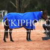 Working Equitation - 15 7 2017_1090