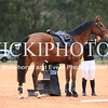 Working Equitation - 15 7 2017_12