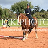 Working Equitation - 15 7 2017_433