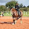 Working Equitation - 15 7 2017_434