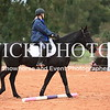 Working Equitation - 15 7 2017_220