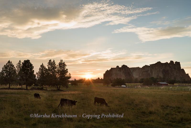 Fiddle Head Farm, Terrebonne, Oregon
