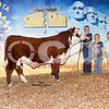17SDSF_Hereford_ChFuturitySteer_Goehring