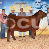 17SDSF_RedAngus_GrChFemale_Open_ThomasRanch