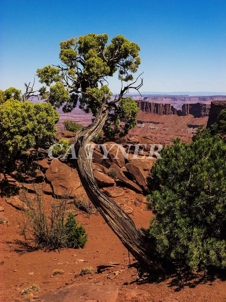 Needles Overlook Canyonlands National Park Utah 2
