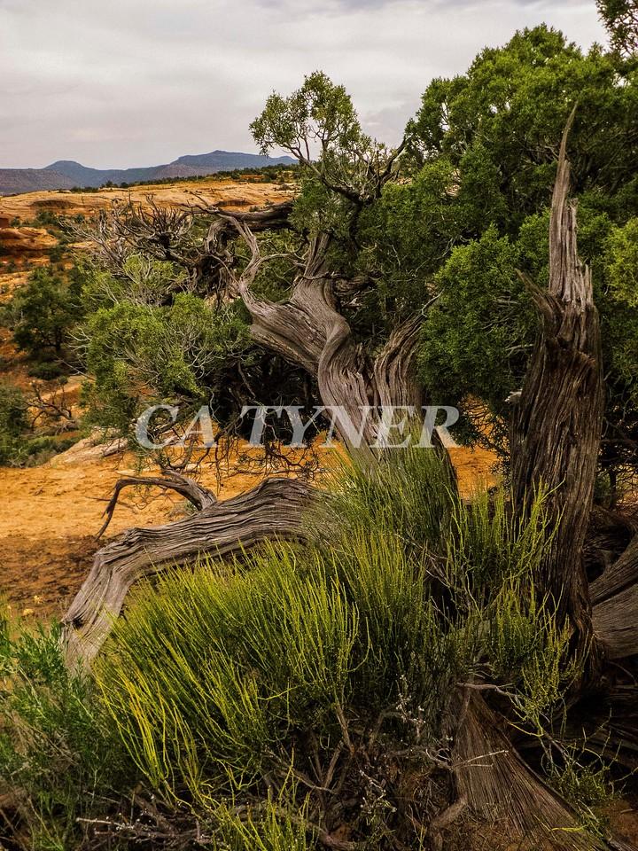 Needles Overlook Canyonlands National Park Utah 9