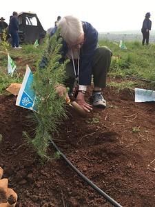 05-planting-trees