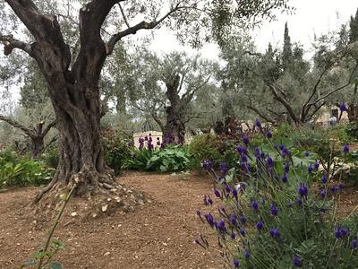 14-garden-of-gethsemane