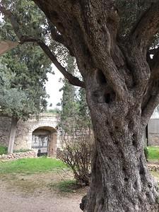 13-garden-of-gethsemane