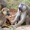 2017TravelerContest-DennisShak-AmboseliKenya-VirtuosoPurchasedLead-456813