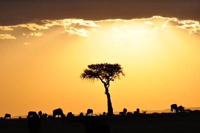2017TravelerContest-StephenParker-SerengetiTanzania-SueKasmarTravel-430779