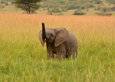 2017TravelerContest-TriciaRoarty-Kenya-Brownell-416516